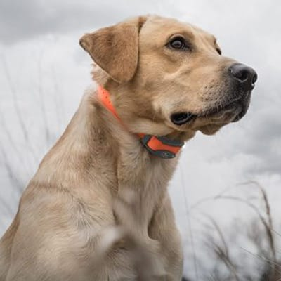Front Range Gun Dog Training Collar Accessories