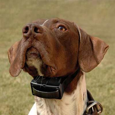 front-range-gun-dog-sells-bark-collars